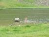 Koupel v jezeru Dohjaska