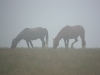 Koně na Dohjasce
